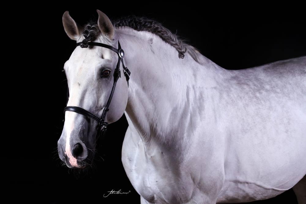rencontre equestre beaucaire 2012 Clamart